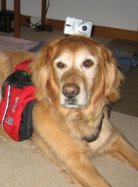Doggie Cam