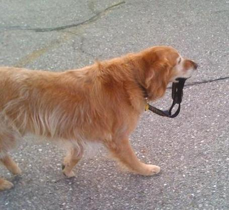 Taking myself for a walk