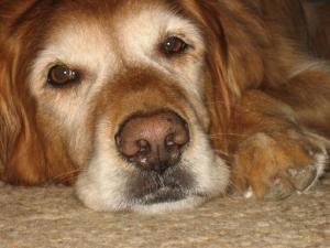 Madison T. Dog