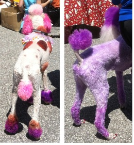 Painted Poodles